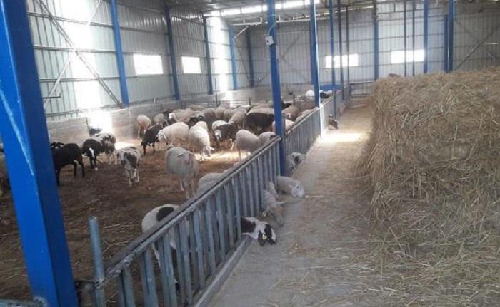 В загоне для скота найдены украденные свитки Торы
